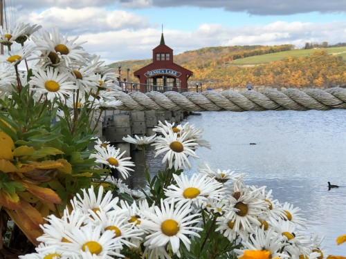 Fall Flowers at the Marina